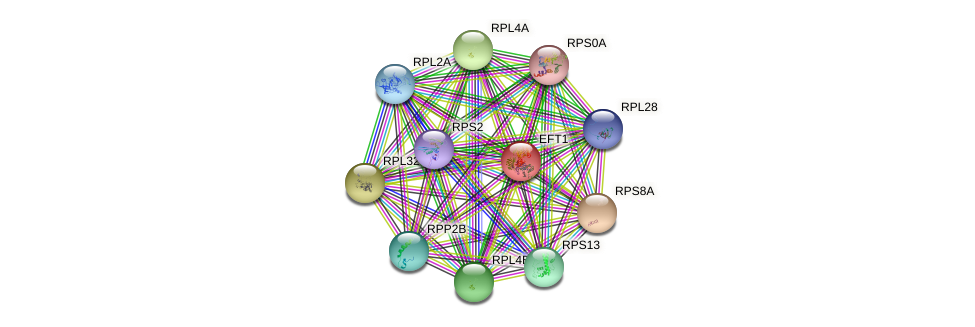 EFT1 protein (Saccharomyces cerevisiae) - STRING interaction network