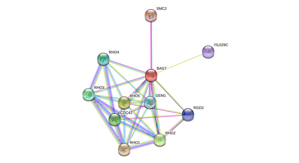 BAG7 protein (Saccharomyces cerevisiae) - STRING interaction network