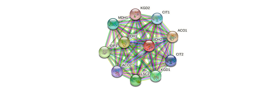 IDH2 protein (Saccharomyces cerevisiae) - STRING interaction network