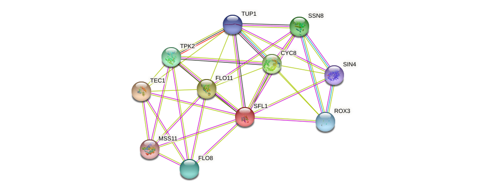 SFL1 protein (Saccharomyces cerevisiae) - STRING interaction network