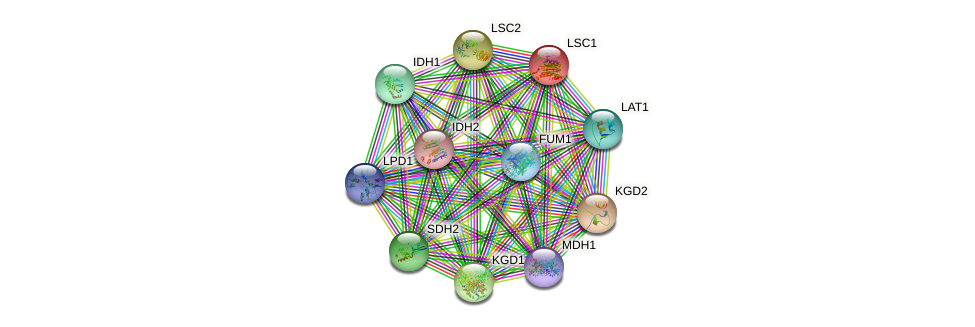 LSC1 protein (Saccharomyces cerevisiae) - STRING interaction network