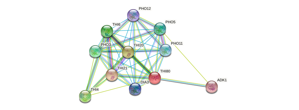 THI80 protein (Saccharomyces cerevisiae) - STRING interaction network