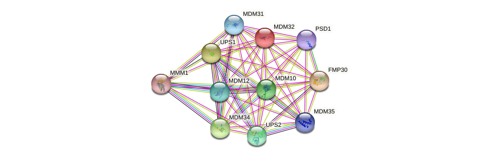 MDM32 protein (Saccharomyces cerevisiae) - STRING interaction network
