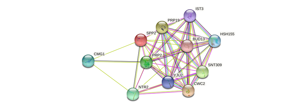 SPP2 protein (Saccharomyces cerevisiae) - STRING interaction network