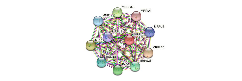 MRPL23 protein (Saccharomyces cerevisiae) - STRING interaction network