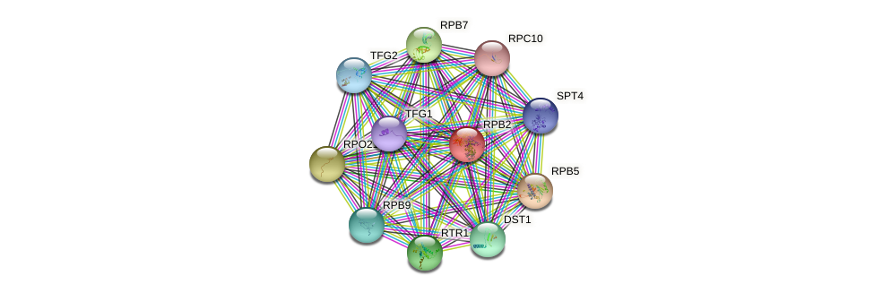 RPB2 protein (Saccharomyces cerevisiae) - STRING interaction network