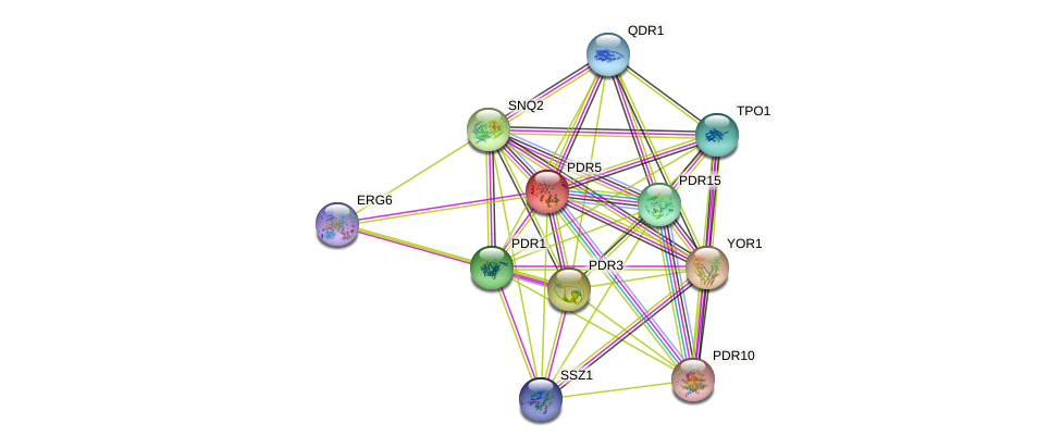 PDR5 protein (Saccharomyces cerevisiae) - STRING interaction network