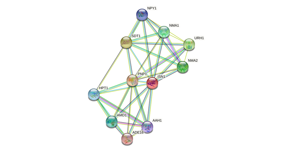 ISN1 protein (Saccharomyces cerevisiae) - STRING interaction network