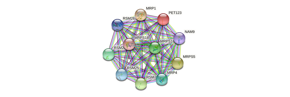 PET123 protein (Saccharomyces cerevisiae) - STRING interaction network