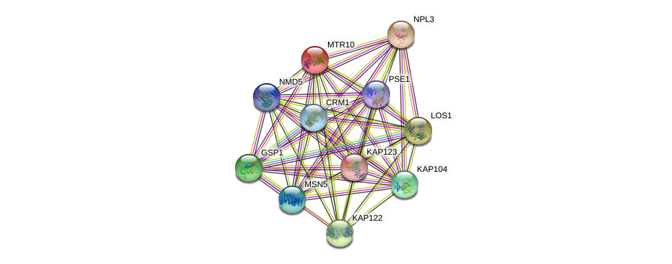 MTR10 protein (Saccharomyces cerevisiae) - STRING interaction network
