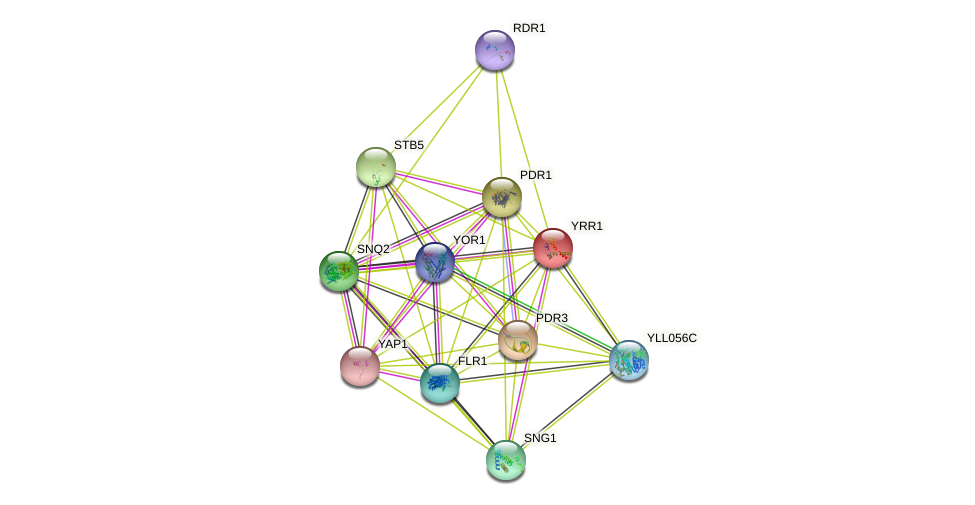 YRR1 protein (Saccharomyces cerevisiae) - STRING interaction network
