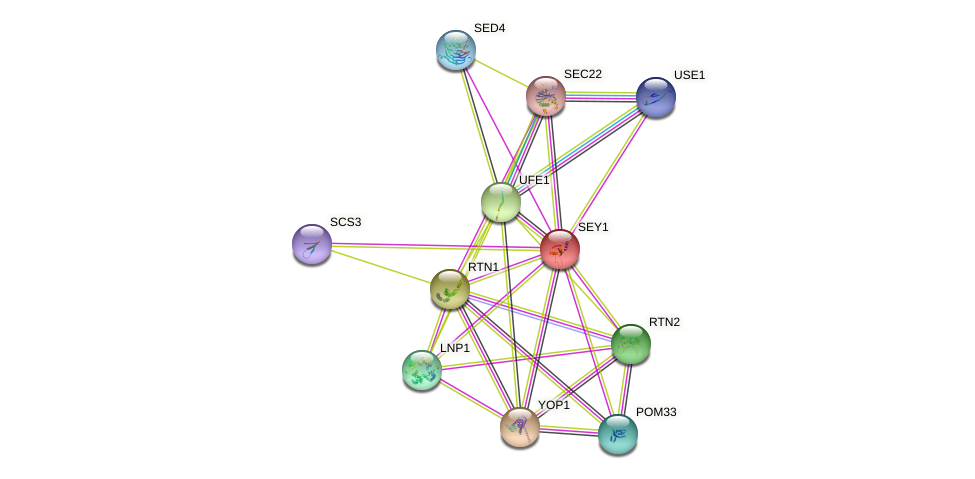 SEY1 protein (Saccharomyces cerevisiae) - STRING interaction network