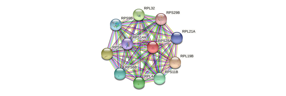 RPS28A protein (Saccharomyces cerevisiae) - STRING interaction network