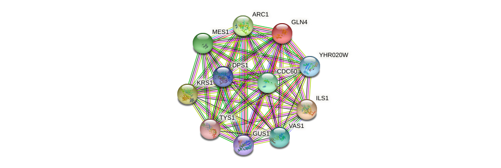 GLN4 protein (Saccharomyces cerevisiae) - STRING interaction network