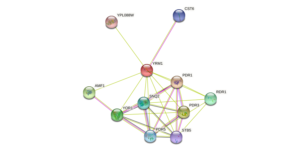 YRM1 protein (Saccharomyces cerevisiae) - STRING interaction network