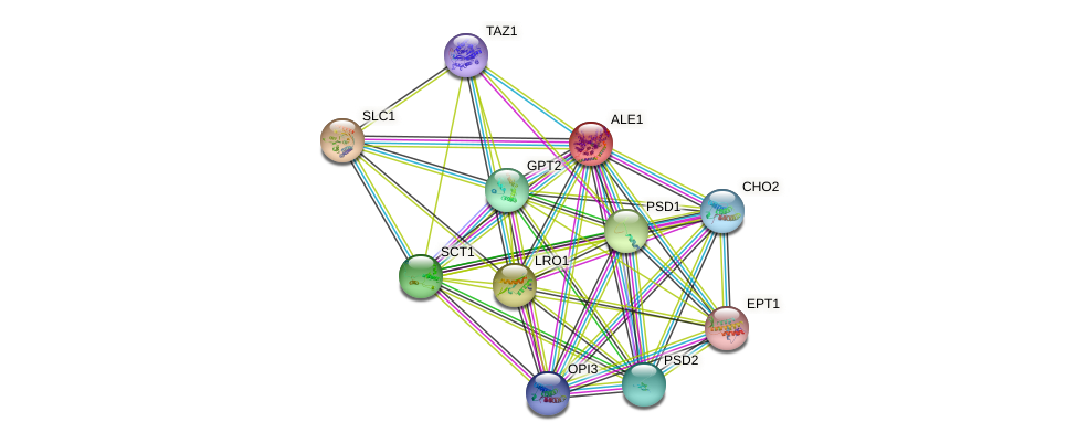 ALE1 protein (Saccharomyces cerevisiae) - STRING interaction network