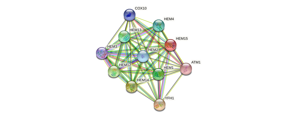 HEM15 protein (Saccharomyces cerevisiae) - STRING interaction network