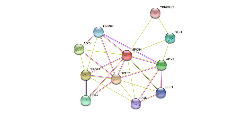 MPC54 protein (Saccharomyces cerevisiae) - STRING interaction network