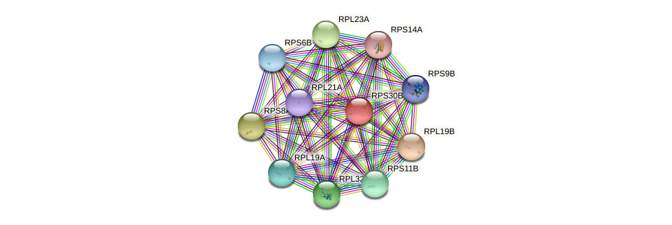 RPS30B protein (Saccharomyces cerevisiae) - STRING interaction network