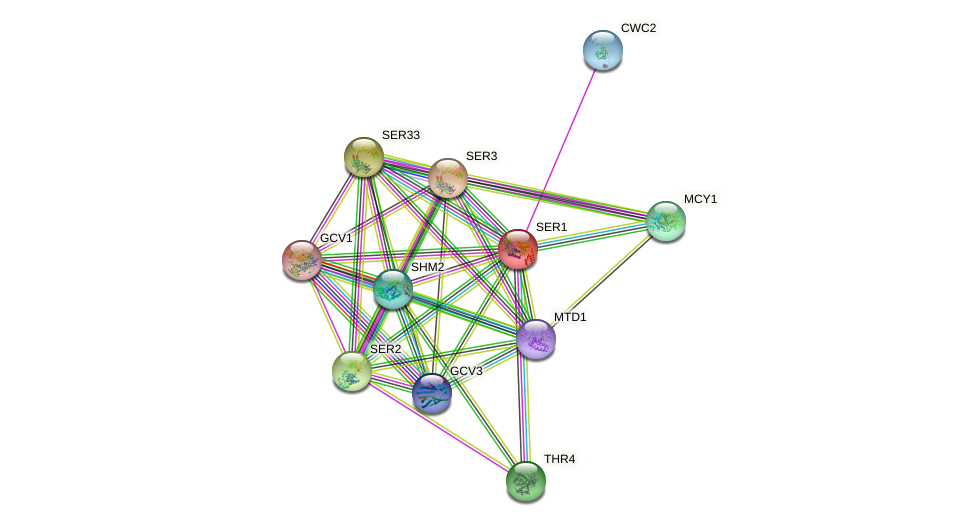 SER1 protein (Saccharomyces cerevisiae) - STRING interaction network