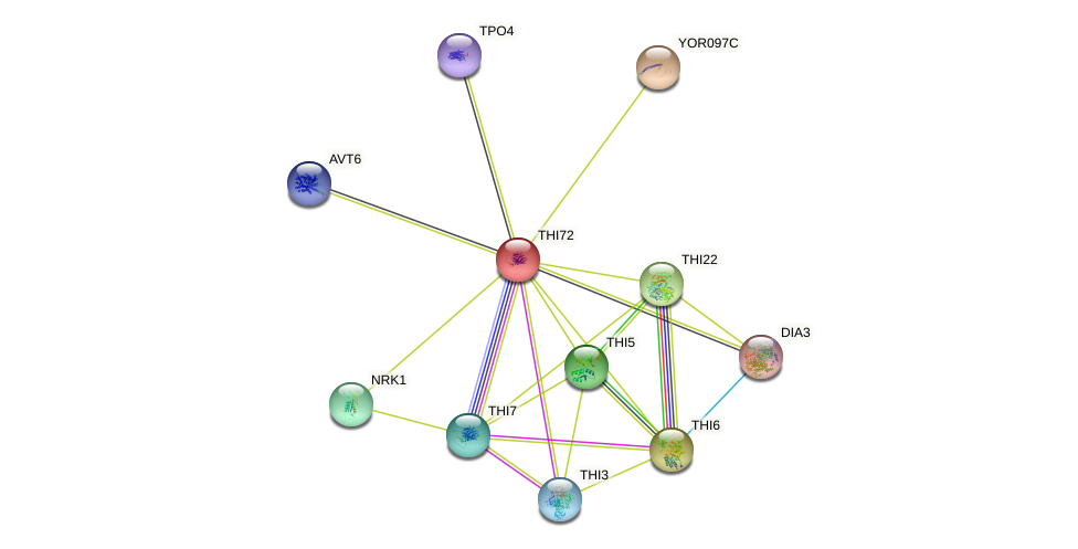 THI72 protein (Saccharomyces cerevisiae) - STRING interaction network