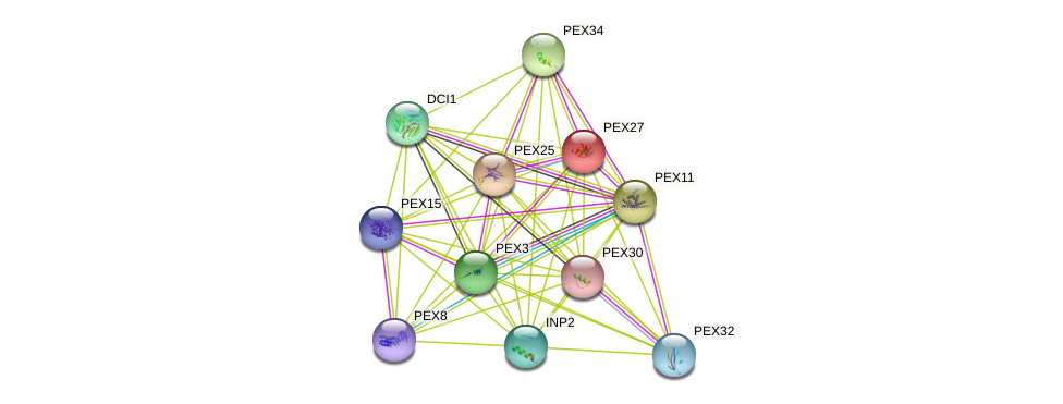 PEX27 protein (Saccharomyces cerevisiae) - STRING interaction network