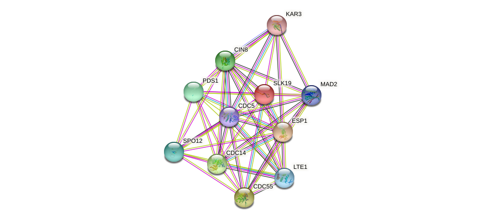 SLK19 protein (Saccharomyces cerevisiae) - STRING interaction network