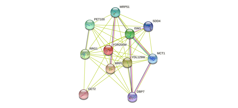 YOR200W protein (Saccharomyces cerevisiae) - STRING interaction network