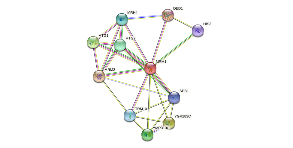 MRM1 protein (Saccharomyces cerevisiae) - STRING interaction network