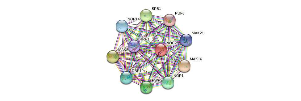 NOC2 protein (Saccharomyces cerevisiae) - STRING interaction network