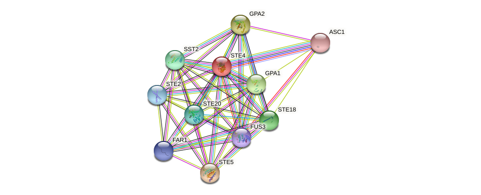 STE4 protein (Saccharomyces cerevisiae) - STRING interaction network