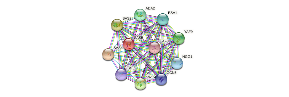 SAS5 protein (Saccharomyces cerevisiae) - STRING interaction network