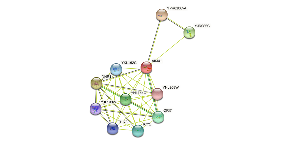AIM41 protein (Saccharomyces cerevisiae) - STRING interaction network