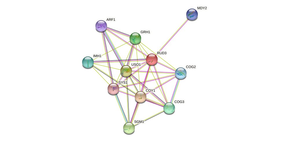 RUD3 protein (Saccharomyces cerevisiae) - STRING interaction network