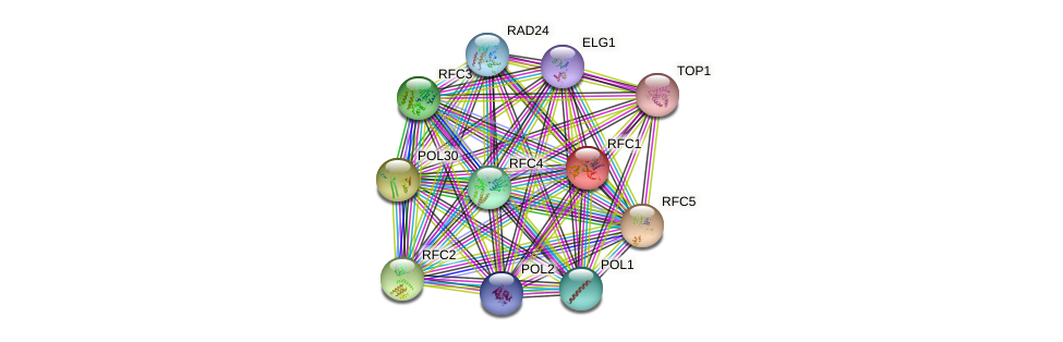RFC1 protein (Saccharomyces cerevisiae) - STRING interaction network