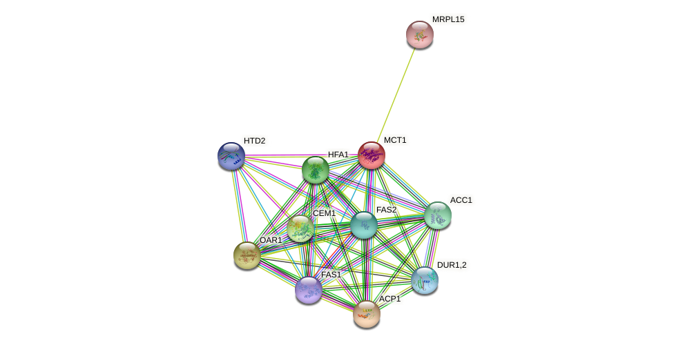 MCT1 protein (Saccharomyces cerevisiae) - STRING interaction network