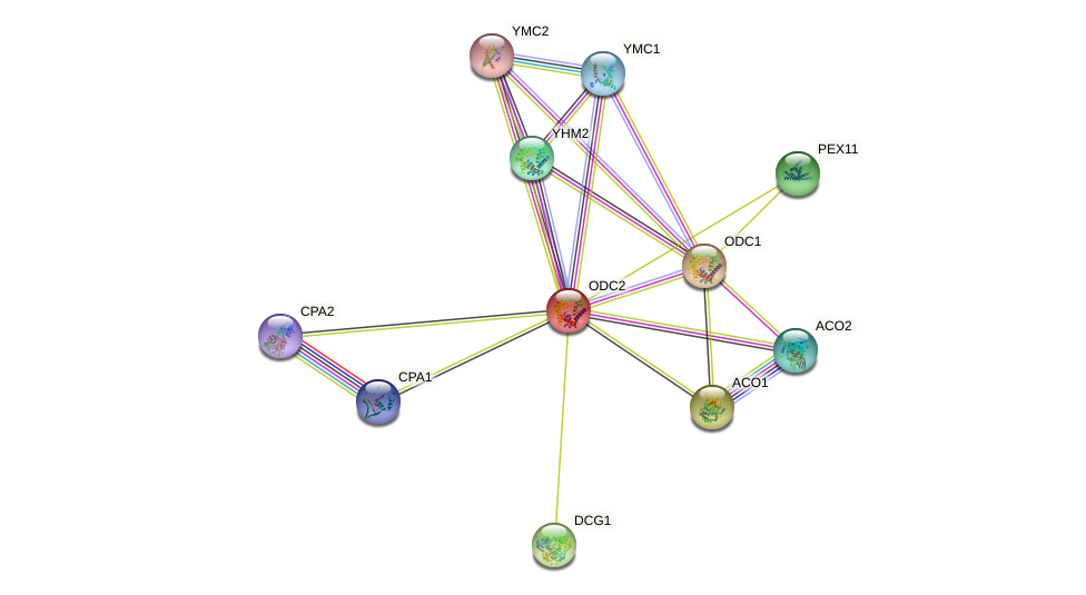 ODC2 protein (Saccharomyces cerevisiae) - STRING interaction network