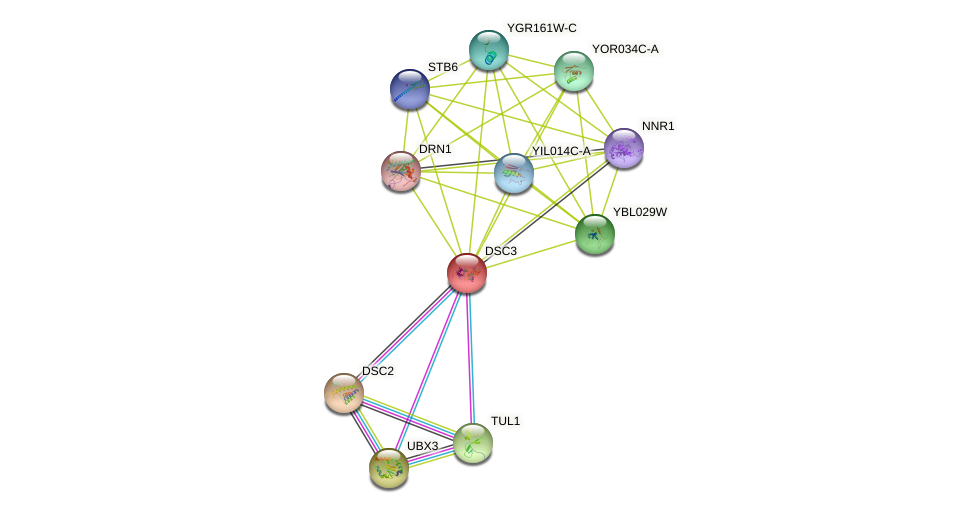 DSC3 protein (Saccharomyces cerevisiae) - STRING interaction network