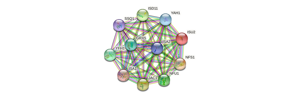ISU2 protein (Saccharomyces cerevisiae) - STRING interaction network