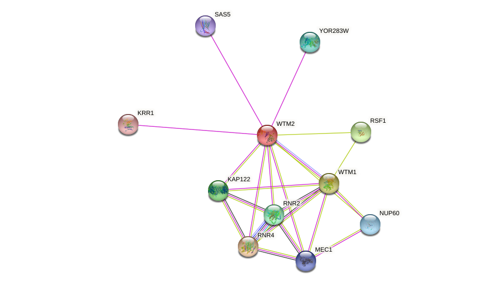WTM2 protein (Saccharomyces cerevisiae) - STRING interaction network