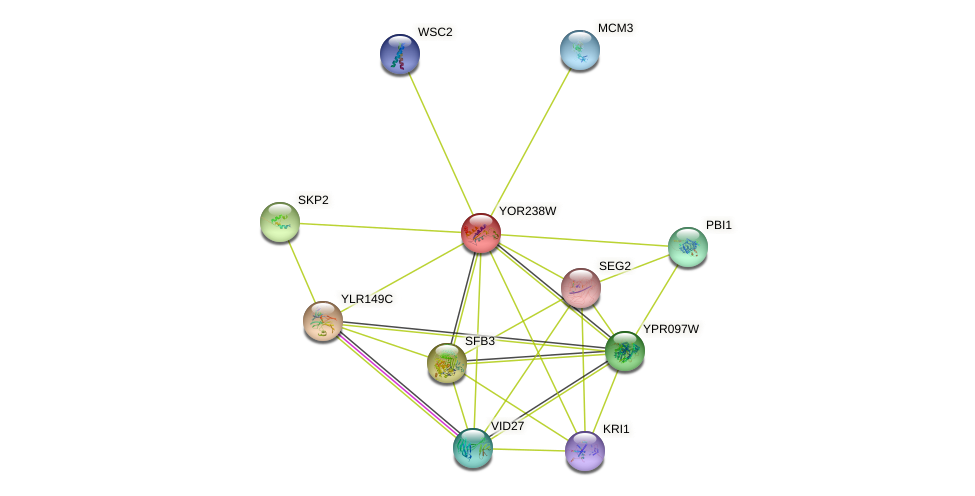 YOR238W protein (Saccharomyces cerevisiae) - STRING interaction network