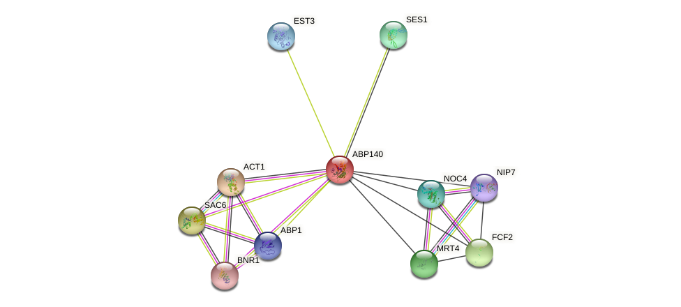 ABP140 protein (Saccharomyces cerevisiae) - STRING interaction network