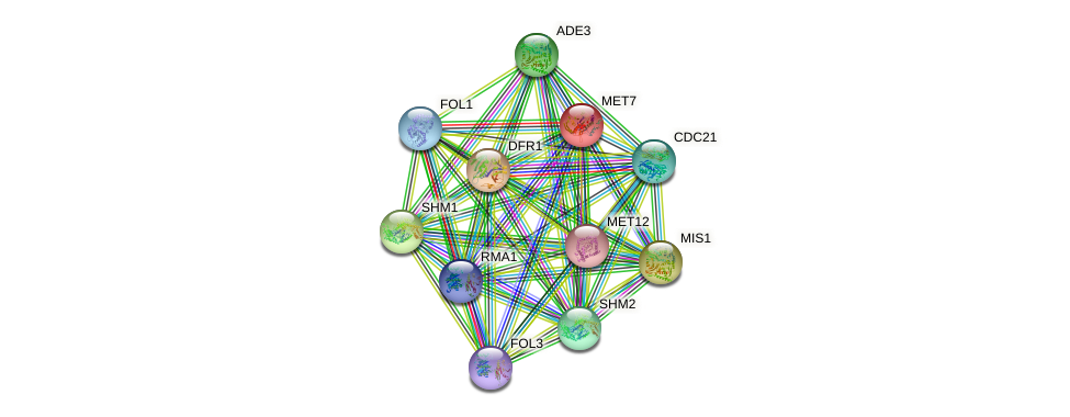 MET7 protein (Saccharomyces cerevisiae) - STRING interaction network