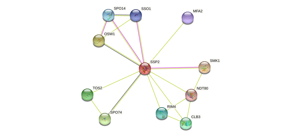 SSP2 protein (Saccharomyces cerevisiae) - STRING interaction network