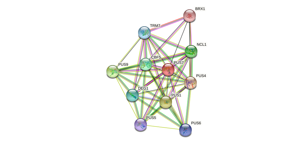 PUS7 protein (Saccharomyces cerevisiae) - STRING interaction network