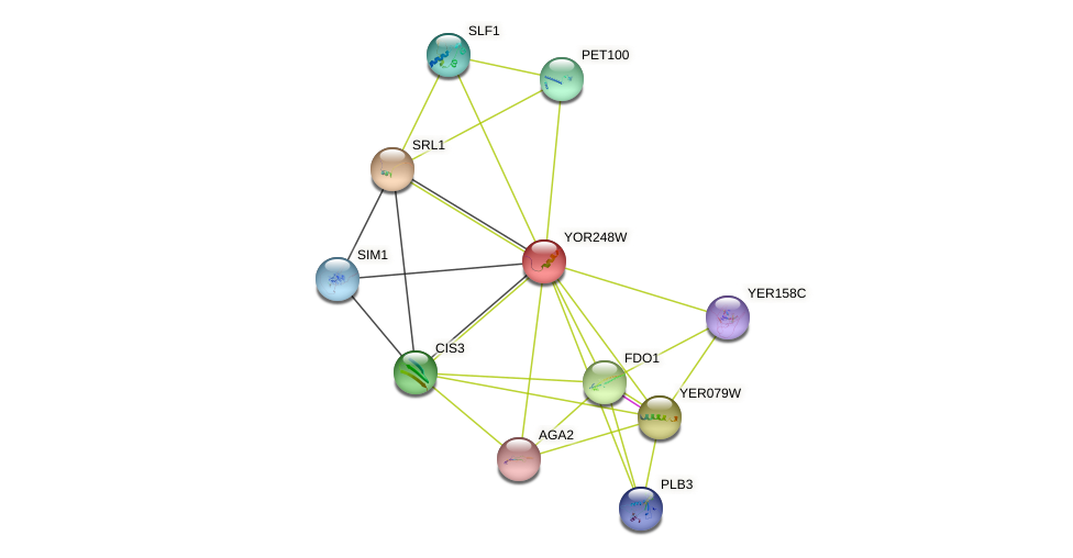 YOR248W protein (Saccharomyces cerevisiae) - STRING interaction network