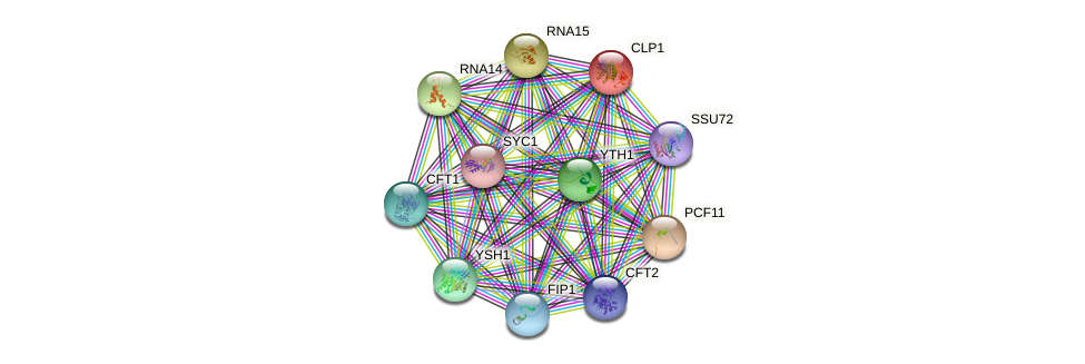CLP1 protein (Saccharomyces cerevisiae) - STRING interaction network