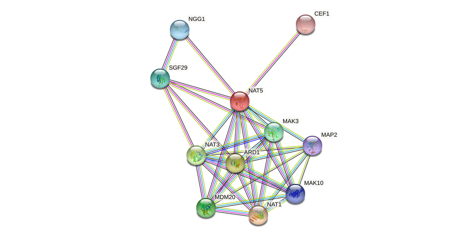 NAT5 protein (Saccharomyces cerevisiae) - STRING interaction network