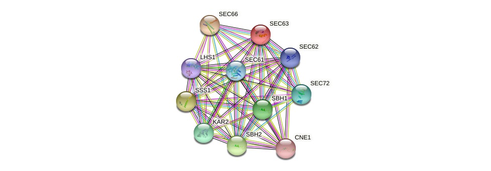 SEC63 protein (Saccharomyces cerevisiae) - STRING interaction network