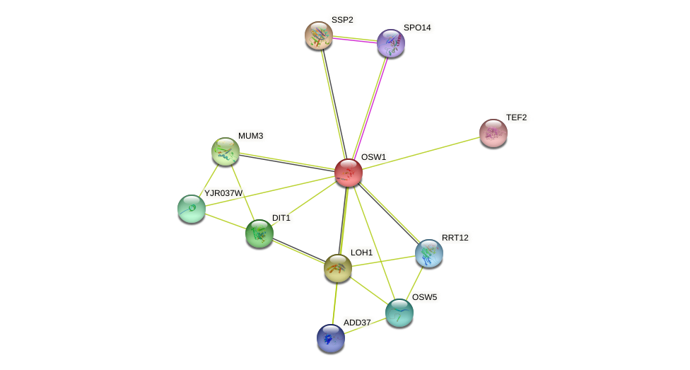 OSW1 protein (Saccharomyces cerevisiae) - STRING interaction network